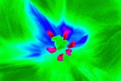 grüner tulpenmantel