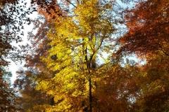 Herbstbäume Nov. 2015 (22)