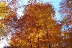 Herbstbäume Nov. 2015 (23)