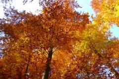 Herbstbäume Nov. 2015 (24)