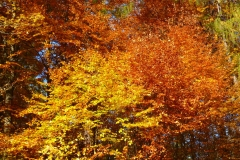 Herbstbäume Nov. 2015 (28)