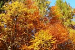Herbstbäume Nov. 2015 (29)