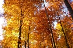 Herbstbäume Nov. 2015 (31)
