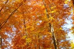 Herbstbäume Nov. 2015 (32)