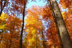 Herbstbäume Nov. 2015 (33)