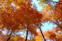 Herbstbäume Nov. 2015 (34)