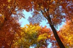 Herbstbäume Nov. 2015 (36)