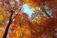 Herbstbäume Nov. 2015 (37)