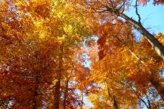 Herbstbäume Nov. 2015 (38)