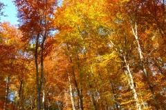 Herbstbäume Nov. 2015 (39)