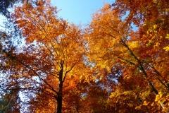 Herbstbäume Nov. 2015 (41)