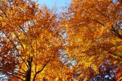 Herbstbäume Nov. 2015 (42)