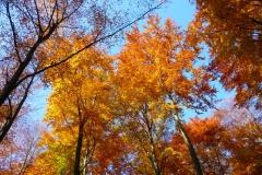 Herbstbäume Nov. 2015 (44)