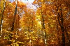 Herbstbäume Nov. 2015 (46)