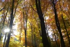Herbstbäume Nov. 2015 (55)