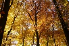 Herbstbäume Nov. 2015 (56)
