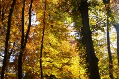 Herbstbäume Nov. 2015 (57)