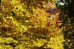 Herbstbäume Nov. 2015 (58)