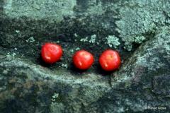 zwei rote perlen auf stein